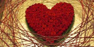 rosas de color rojo